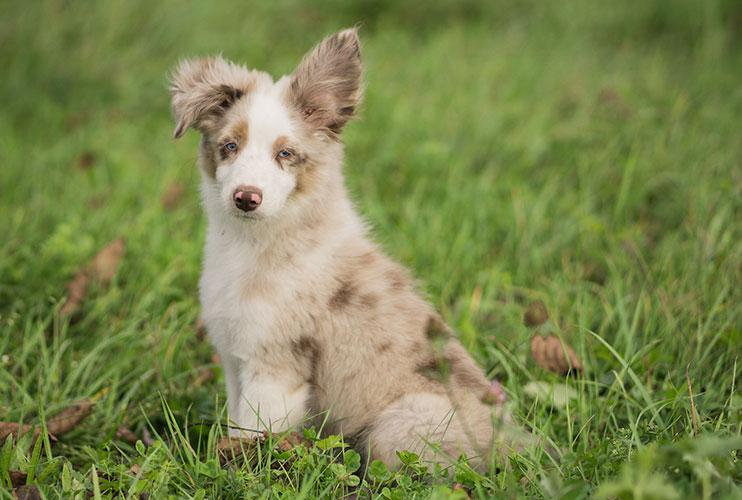 Natürliche Hundepflege aus Österreich von CANELO